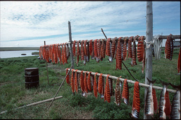 Drying fish © AGP