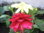blomst_150x113