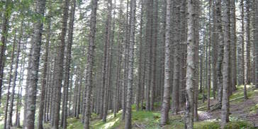 Skog i Leirfjord