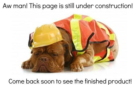 Dog resting during construction