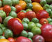 Tomater - artsmangfold