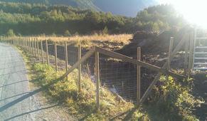 Landskap i drift prosjektet har midlar att til rydding og inngjerding av beiteområde. Foto: landskapidrift.no
