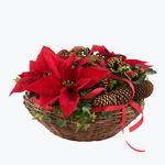 160583_blomster_plante_planter