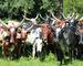 Langhornede kyr fra Uganda