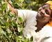 Elizabeth Chepkwony, bonde og medlem av det Fairtrade-sertifiserte kaffekooperativet Kabngetuny i Kenya. Foto: David Macharia