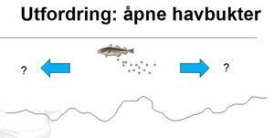 kartleggingsmet apenfjord