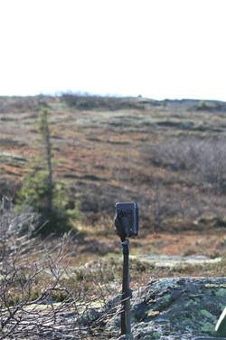bushnell-trophycam-paa-post