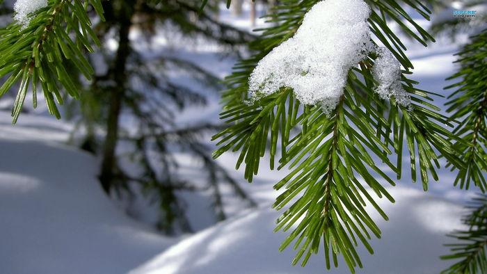 Vinter tre med snø