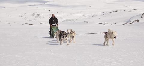 Hundespann i Láhko nasjonalpark