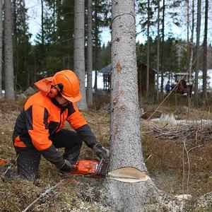 Tømmerhugger (forest-4081291 pixabay.com)