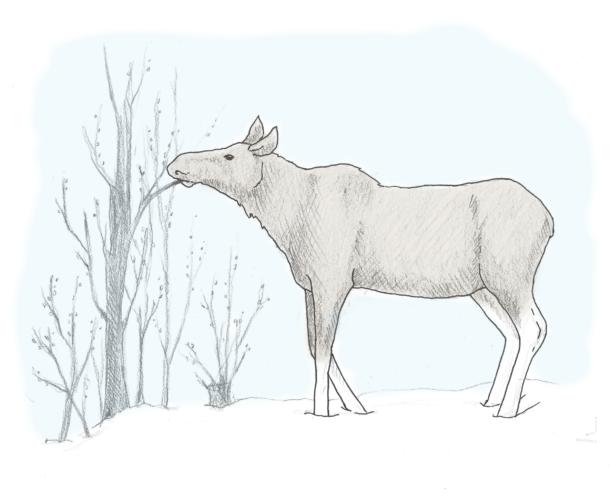 elg - passiv