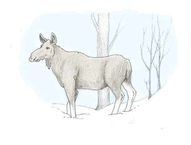 elg - oppmerksom