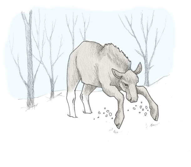elg - angrep