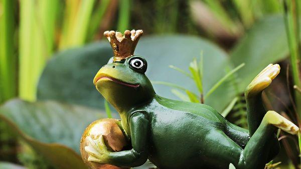 Frosk med krone på hodet