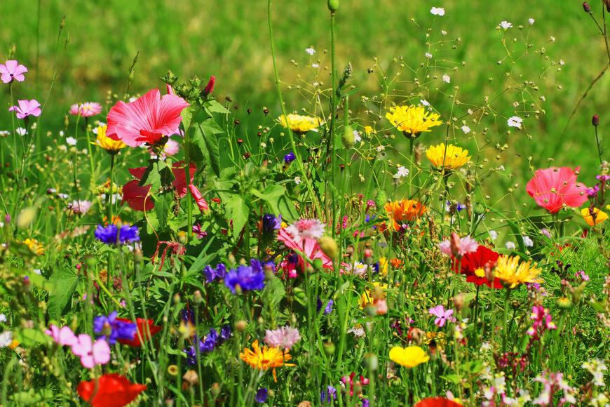 Blomstereng - sommer